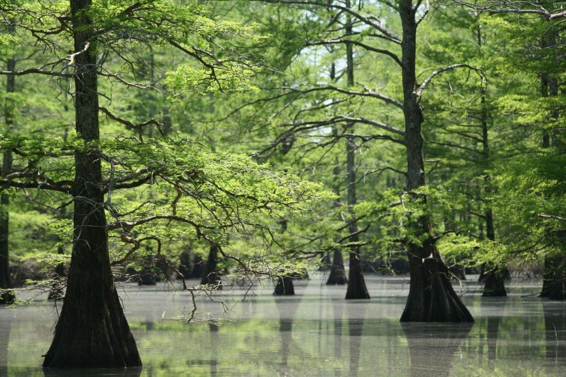 cypress-bottoms-big-lake-nwr